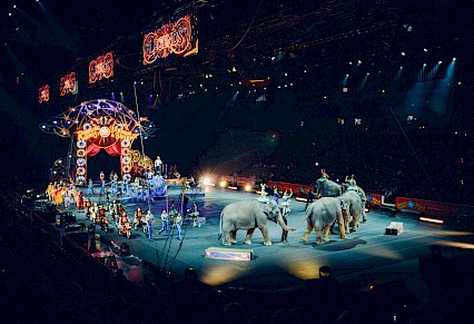 Circus Animals Wodonga